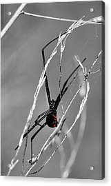 Unmistakable  Acrylic Print by JC Findley
