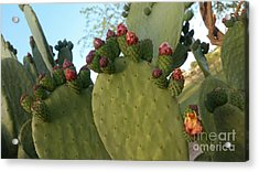 Unprickly Prickly Pear Horizontal Acrylic Print