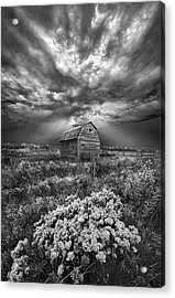 Unsettled Acrylic Print by Phil Koch
