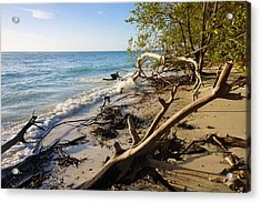 The Unspoiled Beaty Of Barefoot Beach Preserve In Naples, Fl Acrylic Print