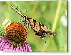 Untitled Butterfly Acrylic Print