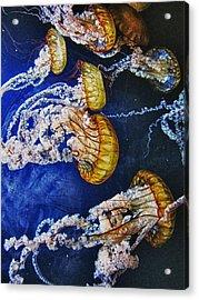 Untitled Acrylic Print by John Scharle