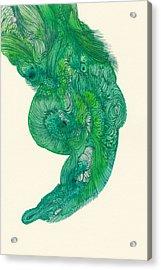 Untitled - #ss14dw040 Acrylic Print by Satomi Sugimoto