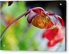Unusual Aquatic Flower Acrylic Print by Kaye Menner