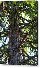 Up A Tree Acrylic Print