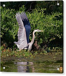 Up And Out Acrylic Print by Robert Pearson