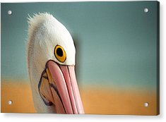 Acrylic Print featuring the photograph Up Close And Personal With My Pelican Friend by T Brian Jones