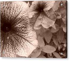 Up Close Acrylic Print by Jennifer Compton