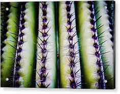 Up Close Look Acrylic Print