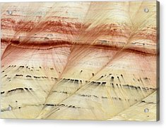 Up Close Painted Hills Acrylic Print by Greg Nyquist