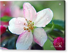 Acrylic Print featuring the photograph Up Close Spring Blossom  by Lila Fisher-Wenzel