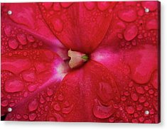 Up Close With Impatiens Acrylic Print