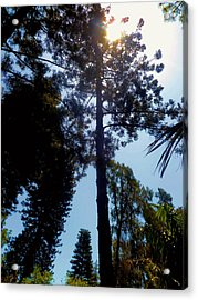 Up In The Sky Trees Acrylic Print