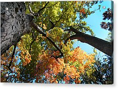 Acrylic Print featuring the photograph UP by Joseph G Holland