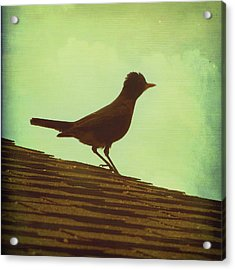 Up On A Roof Acrylic Print by Amy Tyler