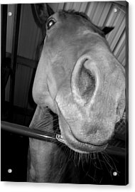 Up The Nose Acrylic Print by Lindsey Orlando
