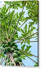 Up The Papaya Acrylic Print