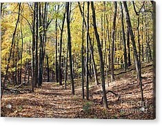 Up The Woodland Trail Acrylic Print