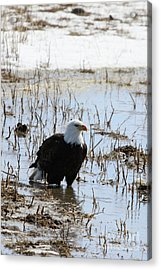 Up To His Knees Acrylic Print