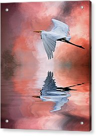 Up. Up And Away Acrylic Print by Cyndy Doty
