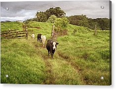 Upcountry Ranch Acrylic Print