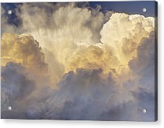 Updraft Of Cotton Acrylic Print