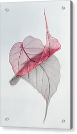 Uplifted Acrylic Print by Maggie Terlecki