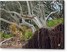 Uprooted Acrylic Print by Bruce Gourley