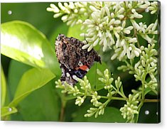 Upside Down Nectar Collector Acrylic Print by ShadowWalker RavenEyes Dibler