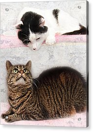 Upstairs Downstairs With Emmy And Pepper Acrylic Print by Andee Design