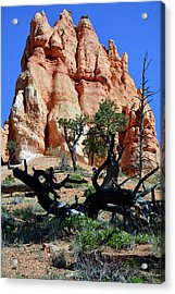 Acrylic Print featuring the photograph Upward by Bruce Gourley