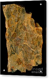 Uranium Ore Conglomerate Acrylic Print by Ted Kinsman
