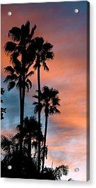 Urban Palms Acrylic Print by Peter Breaux