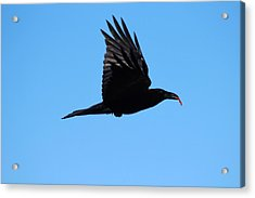 Urban Raven Acrylic Print