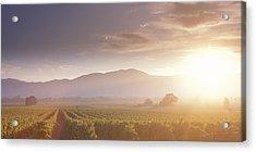 Usa, California, Napa Valley, Vineyard Acrylic Print by Panoramic Images