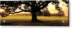 Usa, Louisiana, Oak Tree At Sunset Acrylic Print by Panoramic Images