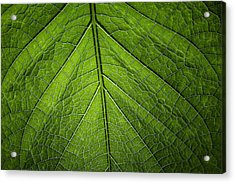 Acrylic Print featuring the photograph Usbg Leaf One by Kevin Blackburn