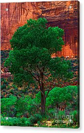 Utah - Cottonwood Acrylic Print by Terry Elniski