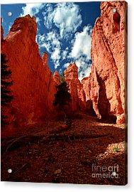 Utah - Bryce Canyon Acrylic Print