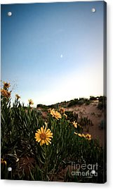 Utah Coral Sand Dune Flowers Acrylic Print by Ryan Kelly