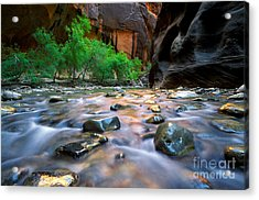 Utah - Virgin River 5 Acrylic Print