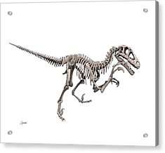 Utahraptor Acrylic Print