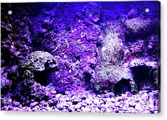 Acrylic Print featuring the photograph Uw Coral Stone 2 by Francesca Mackenney