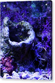 Acrylic Print featuring the digital art Uw Coral Stone by Francesca Mackenney