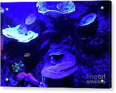 Acrylic Print featuring the photograph Uw Neon Coral by Francesca Mackenney