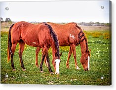 Acrylic Print featuring the photograph V90 Over For Dinner by Melinda Ledsome