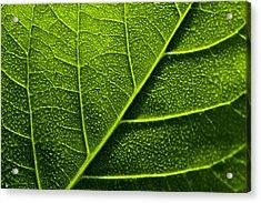 Vain Leaf Acrylic Print