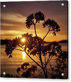 Valerian Sunset Acrylic Print