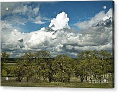 Valley Oaks Acrylic Print