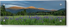 Valley Way Lupine Sunset Acrylic Print
